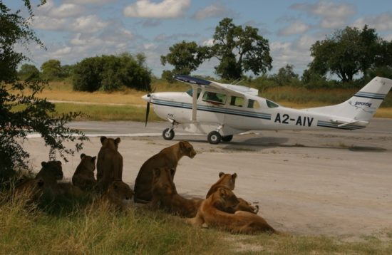 Fly in Lodge Safaris