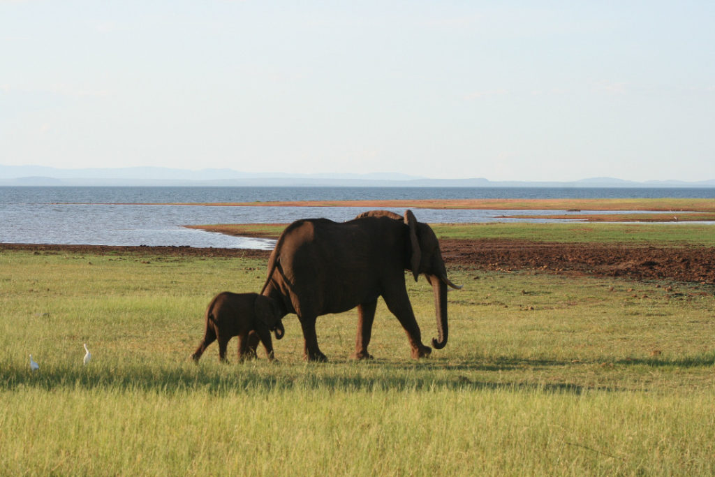 Kariba Elephants